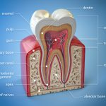 bedford root canal